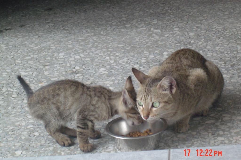 小小貓與媽媽