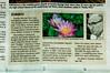 The Source (dulcelife) Tags: tampatribune feature eurekasprings newspaper dulcelife luishoyos waterlilies