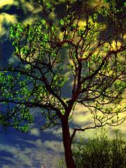 nacht (Optimus Paul) Tags: tree nightshot saveme deleteme deleteme2 saveme2 deleteme3 deleteme4 deletem5 saveme3 saveme4 deleteme6 deleteme7 saveme5 deleteme8 saveme6 saveme7 deleteme9 saveme8 saveme9 deleteme10