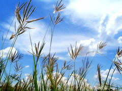 grassy field (jemione) Tags: sky office clouds grass field topv111 topc50 canon powershota75 ilikegrass