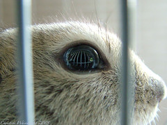 eye of the squirrel (cdw9) Tags: reflection eye squirrel bars cage nibbler eurekahouse richardsonsgroundsquirrel cdw9