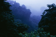 it's a jungle out there (Jeff Epp) Tags: fog mist morning sunrise blue japan matsushima  landscape