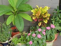 my plants, Sep 04