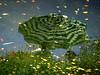 umbrella (johanna) Tags: reflection umbrella chelseaphysicgarden felorzinhasaboiar