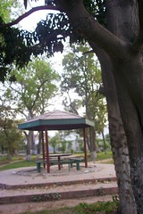 Nawaz Sharif Park... while walking to bus stop in Lahore (piggsee) Tags: ark lahore fun abdul rehman khawar pakistan pharmacy park flowers