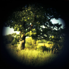 (nicolai_g) Tags: color tree film nature square landscape toy blurry modified redoak reference