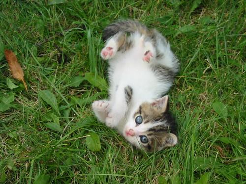 manja dan cute