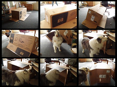 calvin dog doginthebox calvinvsthebox thequicklymovingprinterbox