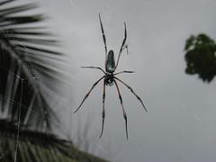 Une araignée pendant au bout d'un fil entre deux plantes