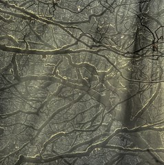 Monkey gone to heaven (pauldunn52) Tags: woodland trees branches mist sunlight moss twigs alun valley wales