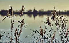 Tjeukemeer-met-het-kerkje-van-Oosterzee (Don Pedro de Carrion de los Condes !) Tags: donpedro d700 landschap friesland frieslan water meer vlakte reflectie spiegel spiegelglad windstil riet pluimen zonlicht