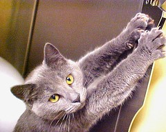 Gray Cat Can't Decide Whether to Scratch or Stretch ~ Over 33,000 Views on this Shot ~ EXPLORED (Pixel Packing Mama) Tags: wow pretty gutentag loveit mostinteresting top20catpix bigstretchcats catsandkittensset catscatscats ilovemycat furryfriday capture cateyes flickrwow nuggets catsdogs magicmoments catpaws greycats walkonthewildside tenth catlovers heartlandhumanesociety handsclawsandallkindsofpaws flickrcat bigstretch catpix pixelpackingmama catssmalltobig dorothydelinaporter worldsfavorite mavicafanclub everybodywantstobeacat i500 notmypet cameraactionnotastilllife wowphotos flickrcats tobysgroupies catcentury ourbelovedcats catsanddogsfromaroundtheworld justmoggies catscookiecatfriends montanathecat~fanclubpool bonzag favoritedpixset mostinterestingaccordingtoflickralgorithmset 20commentsanduppool spcacatspool interestingness32308oct06 catskittensthatqualifytobeinthecatsmeowgrouppoolset thecatsmeowshowcasedonflickr greatpixgallery10favespool wowiekazowie favorites10pool ceruleanthecat~fanclubpool catslookingatyou reallyunlimitedpool 1025favouritespool views7000orfavorites100pool 7500pool uploadedtoflickr2005set chosenbyflickrexploreset over10000viewspool commentedwithwowunlimitedpool 50plusphotographersaged50andbetterpool views20000pool 10000viewsset fix07191233000v18f34c cat33000 cc33000 greatpixgallery20favesgroup