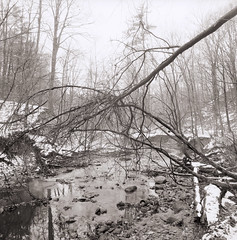 (John Brownlow) Tags: york trees winter wild urban toronto ontario canada tree 6x6 rollei forest landscape north ravine bayview fractal deadman pinkheadedbug brownlow mf sl66 wildthings panf