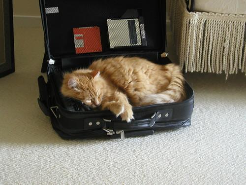 Computer Kitty 1