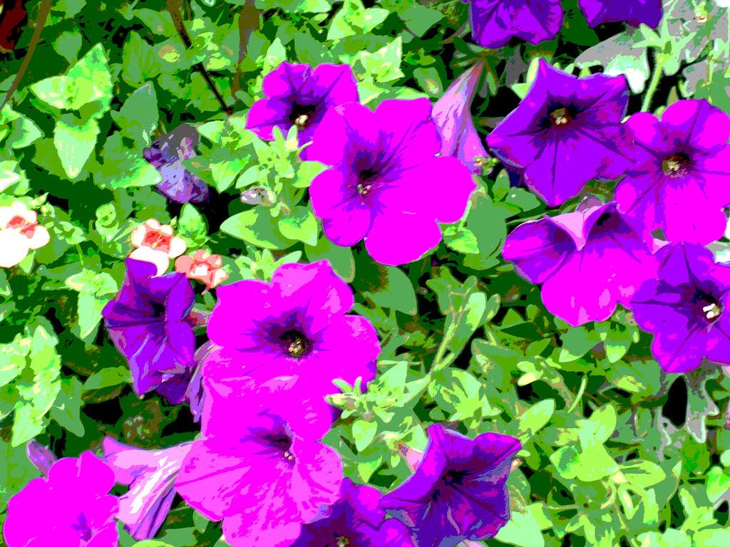 poster purple