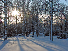 woods and shadows (Marko_K) Tags: trees winter snow tree mrjackfrost tag3 taggedout landscape landscapes helsinki tag2 tag1
