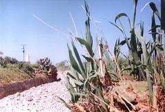 Oued_Milli (Jamal Elkhalladi) Tags: milli hassi