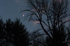 Ash. (koperajoe) Tags: twilight ask gloaming moon silhouette branches tree nightsky