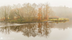 Misty Morning. (MNM Photography 2014) Tags: foggy misty morning calm flats carrickflats carrickmills roe river riverroe reflection reflections autumn autumncolours autumnal fog mist hazy roevalley roevalleycountrypark weir hydro hydroelectric lade mirror millpond glass limavady countyderry countylderry northernireland ulster canon canon5dmkiii canonef24105mmf4lisusm