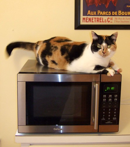 Is she going to cook, or be cooked? (Just kidding...)