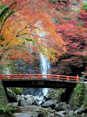 (kiyohu) Tags: 2003 japan waterfall maple   kansai  minoh  minoo   abigfave irresistiblebeauty favoritegarden travelerphotos