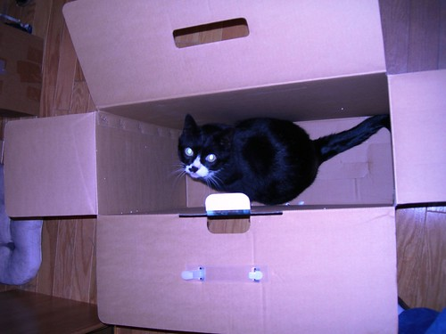 Bernie (Cat) in a box