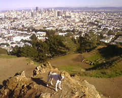 Corona Heights Park offers a great view of San Francisco