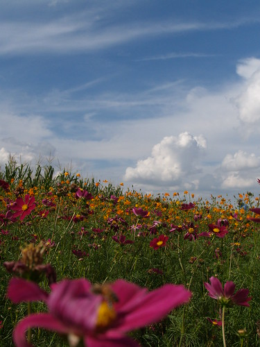 Field of flowers, or cool sky?