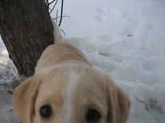 IMG_0984.jpg (Lance) Tags: santa 2006 gd snowbunnies