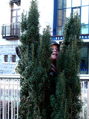 Peek-A-Boo (gisele13) Tags: ireland dublin self gisele december2006 dublingarden