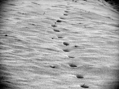 Traces In The Snow (sonykus) Tags: winter bw whit