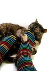 Stripey-Socks-vs-Guinness-2 - by notanartist
