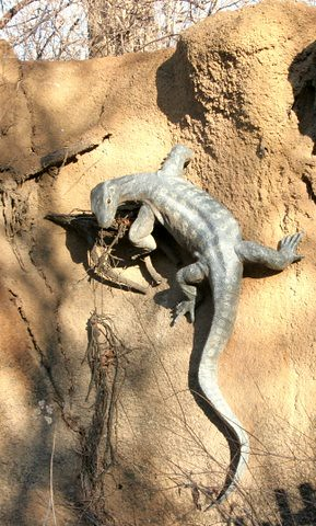 artificial display of monitor lizard, St Louis Zoo