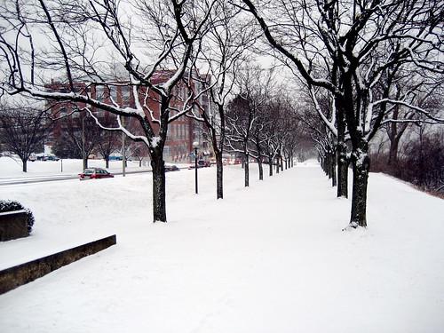 January Snow #335