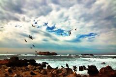 Freedom (kktp_) Tags: ocean sea sky birds clouds d50 landscape monterey nikon scenery pacific tokina freiheit instantfave 1500v60f tokinaatx124afprodx1224mmf4 abigfave