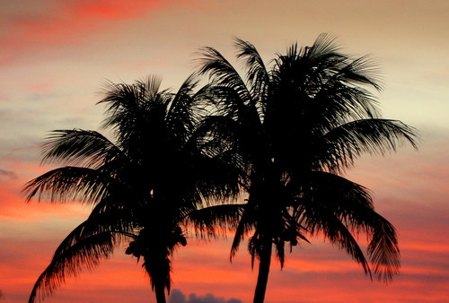 As the sun sets. Miami, Florida