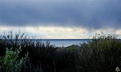 Sunrise Over Crystal Cove (i ea sars) Tags: ocean california morning usa west beach america sunrise losangeles weeds unitedstates crystal cove newportbeach pacificocean newport rebelxt orangecounty oc sonnenaufgang canonrebelxt tumbleweed crystalcovestatepark