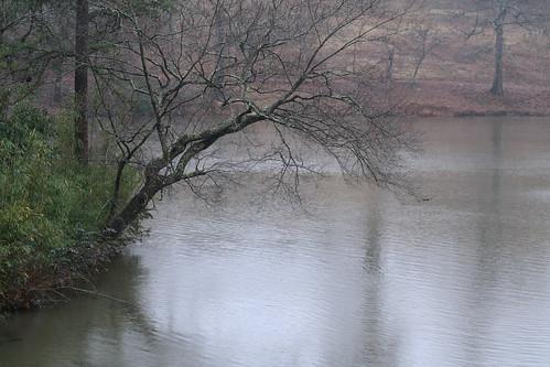 rainy pond #5