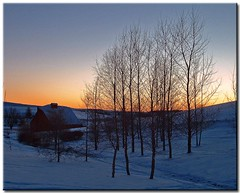 Winter in the Country (revisited) (Roger Lynn) Tags: trees winter sunset snow barn moscow arboretum idaho universityofidaho palouse abigfave featuredinexplore