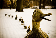 make way for ducklings (shoothead) Tags: snow cold boston duck topv1111 topv999 duckling ducks statues ducklings mallard publicgardens publicgarden bostonist makewayforducklings robertmccloskey bostonpublicgardens nikond200 shoothead ivereadthisstoryathousandtimes takenforcharlotte