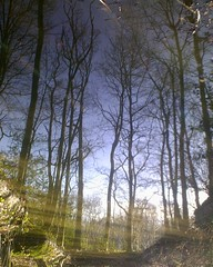 Clear vision (Vonns) Tags: trees holland reflection water netherlands forest leiden leidsehout upsidedown