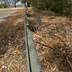 ...seen better days (yewenyi) Tags: crash decay australia victoria vic barrier aus decayed murrayriver collapsed crashbarrier oceania wodonga auspctagged northeastvictoria pc3689 eatenbytermites wineandhighcountry pc3690 wodongaruralcity wodongacitycouncil cityofwodonga murrayrivervalley