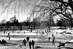 A Winter Scene (NymphoBrainiac) Tags: winter blackandwhite snow skating newburyport christeso bostonphotographer skateblackandwhite bostonphotography