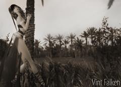 Vint Falken: Arabian