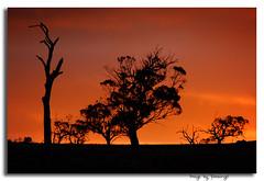 'I love my sunburnt country' (Jules) Tags: trees sunset sky nature silhouette d50 ilovenature nikon bravo shots australia southaustralia finest natures outstanding strathalbyn blueribbonwinner outstandingshots happyandinspiringphotos abigfave anawesomeshot superbmasterpiece strathabynsa