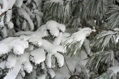 blizzard 008