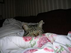 Cat snooze