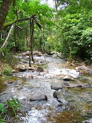Река в джунглях.