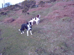 Poppy and Henry (harryball) Tags: dogs moor bodmin