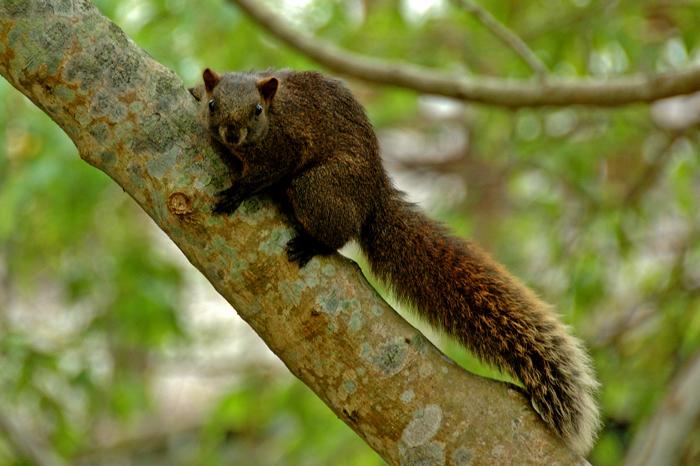 林中的松鼠